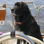 In barca con i quattrozampe