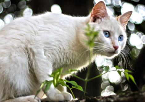 gatto-caccia