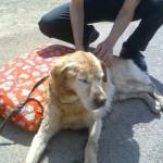 Animali feriti: ora soccorrerli è legge