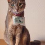 Cat@log: Twitter per gatti