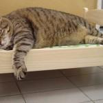 Forlì: epidemia di influenza A in colonia felina