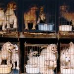 Liberati cento cuccioli vittime della tratta dall'Est