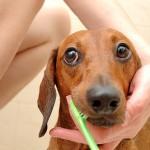 Alitosi nel cane: i rimedi per combatterla