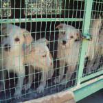 Ancona: scoperto traffico clandestino di cani e gatti