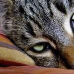 Il gatto: l'animale dai poteri magici