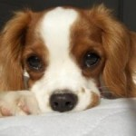 Animali domestici: corso per affidamento congiunto