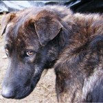 Agrigento: cani seviziati e impiccati