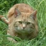 Alfie, il gatto che visse due volte