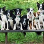 Arriva il test del Dna per cani