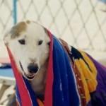 Baubeach, la spiaggia dog friendly a Maccarese