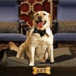 Hotel da cani – lo staff a quattro zampe per le Pet Relations