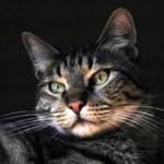 Gatto ucciso da freccia: identificato il responsabile
