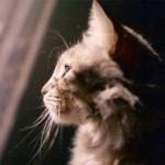 Teramo: organizza funerale per il gatto