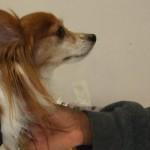 La Pet Therapy contro l'Alzheimer