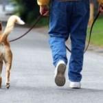 """Trieste: nuove multe per i proprietari di cani """"sporcaccioni"""""""