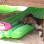Divieto di cani in spiaggia, la denuncia di AIDAA