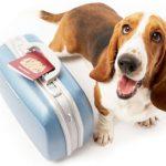 Da AIDAA le regole per passare una vacanza piacevole con il proprio cane