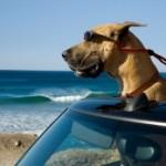 Sansone, un cane alla riscossa