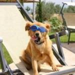 Animali in vacanza: boom di agriturismi e seconde case