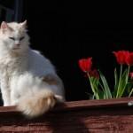 Lo zen e l'arte del gatto