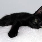 17 novembre: festa del gatto nero!