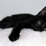 Auguri a tutti i gatti neri!