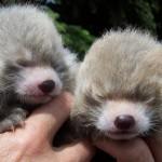 Cuccioli nati in cattività, le foto più belle