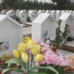 Cimitero dei pet a Caserta e…su Petpassion