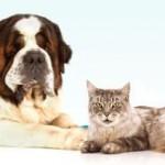Foto-concorso per cani e gatti