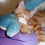 Riposo e sonno dei gatti: consigli pratici