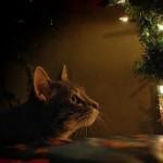 Un gatto e l'albero di Natale? Si puo'!