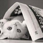 """L'album di """"Amici cucciolotti 2011″ regala un'ambulanza veterinaria!"""