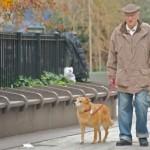 Adozioni in canile: gli anziani i più attivi