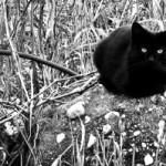 Gatti abbandonati: AIDAA denuncia la crescita del randagismo