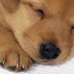 Piccoli consigli per accogliere un cucciolo in casa