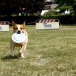 Tonus Disc Dog Day: sole, prato e divertimento!