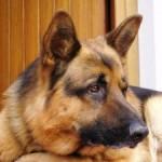 Come fare la denuncia di smarrimento o ritrovamento di un cane