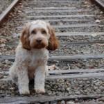 Mille euro di multa se abbandoni il cane