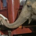 Robert Pattinson e lo scandalo dei maltrattamenti sugli elefanti