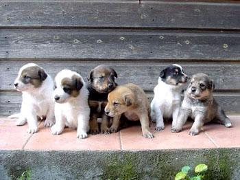 Raduno Per Cani A Rozzano Domenica 26 Giugno