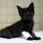 Salvo il gattino nero lanciato dall'auto a Cinisello