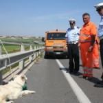 Salerno – Reggio Calabria: traffico in coda e cani abbandonati