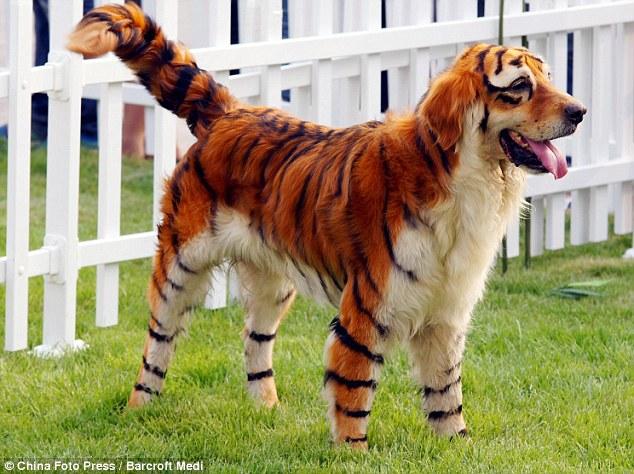 Cani Colorati La Nuova Moda Esplosa In Giappone