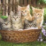Adottare un cane, un gatto o un canarino? Con gli annunci su internet!