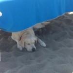 Bau beach, la prima spiaggia attrezzata per cani è in provincia di Roma