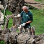Al Bioparco  nel weekend i bambini incontrano da vicino gli animali