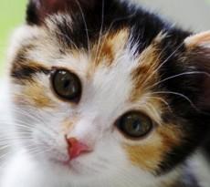 gattino-adozione
