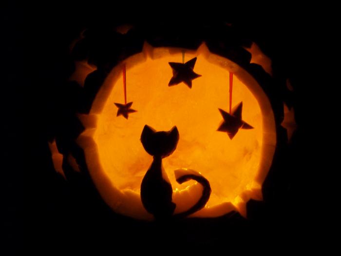 Zucca Halloween Gatto.Ponte Di Halloween Weekend Di Vacanza Con Cane E Gatto