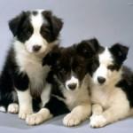 Sempre più cuccioli in regalo