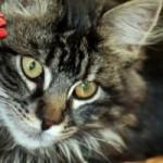Oggi è la Festa Nazionale del Gatto!